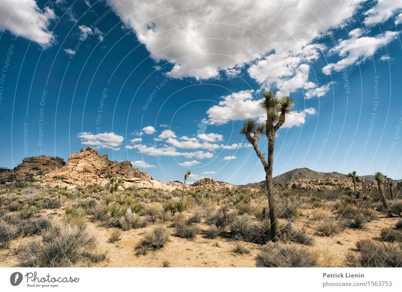 Joshua Tree Sky Nature Vacation & Travel Plant Blue Summer Landscape Clouds Far-off places Mountain Environment Warmth Freedom Sand Weather