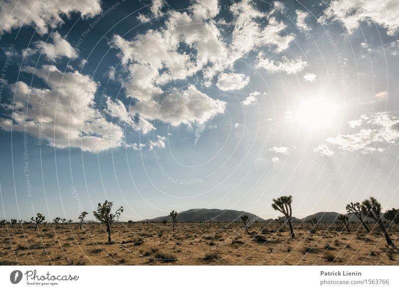 Joshua Tree National Park Life Harmonious Well-being Contentment Vacation & Travel Summer Sun Mountain Environment Nature Landscape Plant Sand Sky Clouds