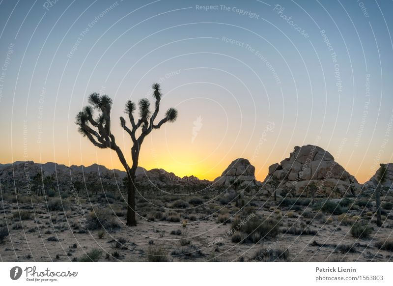 Joshua Tree Sky Nature Vacation & Travel Plant Summer Sun Landscape Mountain Environment Warmth Freedom Sand Rock Weather Growth
