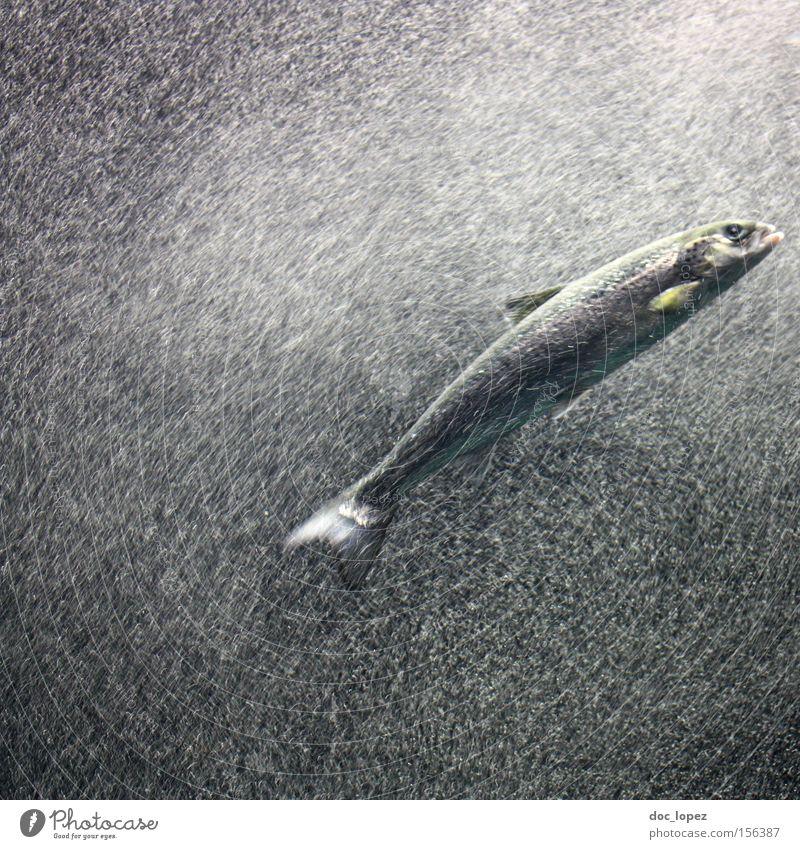 Water Ocean Dark Movement Fish Action Dive Bubble Aquarium Flow Water wings