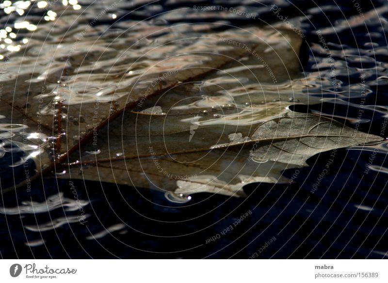 Water Leaf Black Autumn Death Grief Putrefy Go under Autumn leaves Maple leaf Dark background