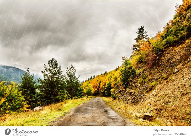 Autumn in the Pyrenees Beautiful Vacation & Travel Mountain Environment Nature Landscape Plant Sky Clouds Tree Grass Leaf Forest Hill Places Lanes & trails