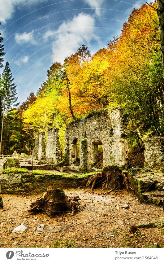 Real Fábrica de Municiones de Eugi Beautiful Mountain Nature Tree Moss Forest Rock Ruin Architecture Stone Green Destruction Photography image Consistency