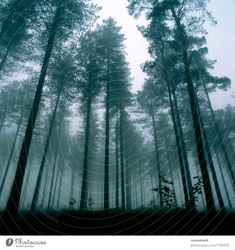 Misty Forest Beautiful Winter Dark Fog Growth England Haze Distorted