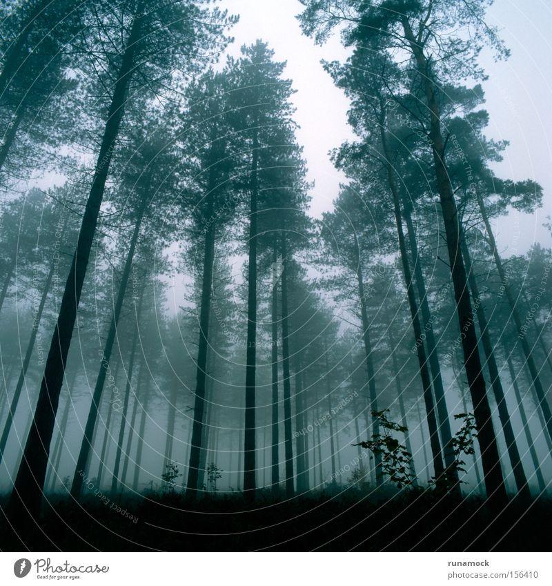 Misty Forest Beautiful Winter Dark Fog Growth England Haze Distorted