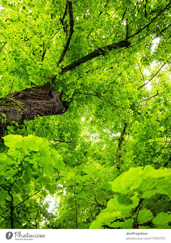 Nature Plant Green Tree Forest Environment Spring Healthy Brown Power Esthetic Success Large Joie de vivre (Vitality) Simple Infinity