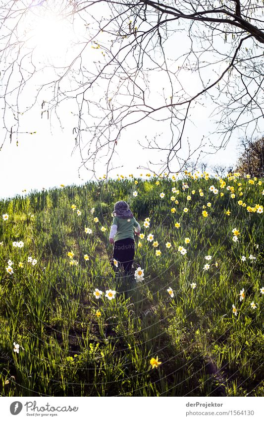 Child Nature Vacation & Travel Plant Landscape Flower Animal Joy Far-off places Mountain Environment Spring Meadow Berlin Happy Freedom