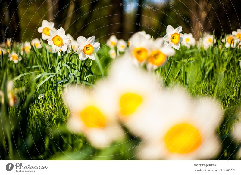 Nature Vacation & Travel Landscape Flower Joy Environment Spring Meadow Berlin Happy Garden Tourism Park Trip Hiking Happiness