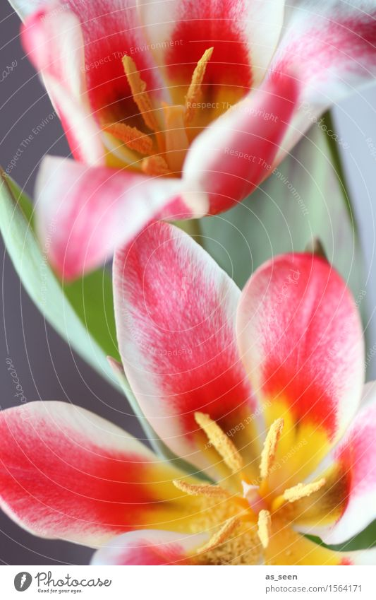 flower power Life Harmonious Easter Environment Nature Plant Spring Tulip Blossom Blossom leave Stamen Pistil Pollen Bouquet Blossoming Illuminate Growth