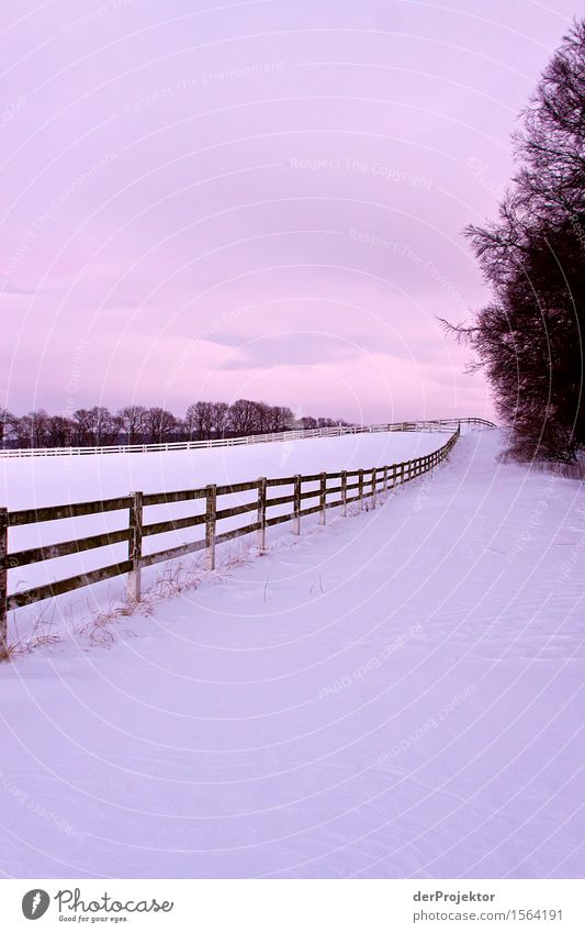 endless fence Vacation & Travel Tourism Trip Adventure Far-off places Freedom Expedition Hiking Environment Nature Landscape Plant Winter Beautiful weather Snow