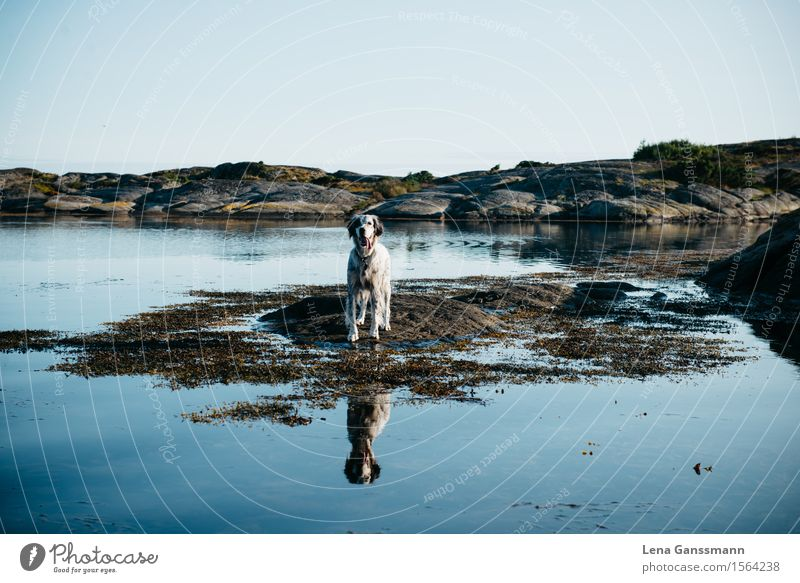 Dog Nature Blue Water Landscape Animal Cold Coast Swimming & Bathing Lake Happiness Stand Communicate Wait To enjoy Island