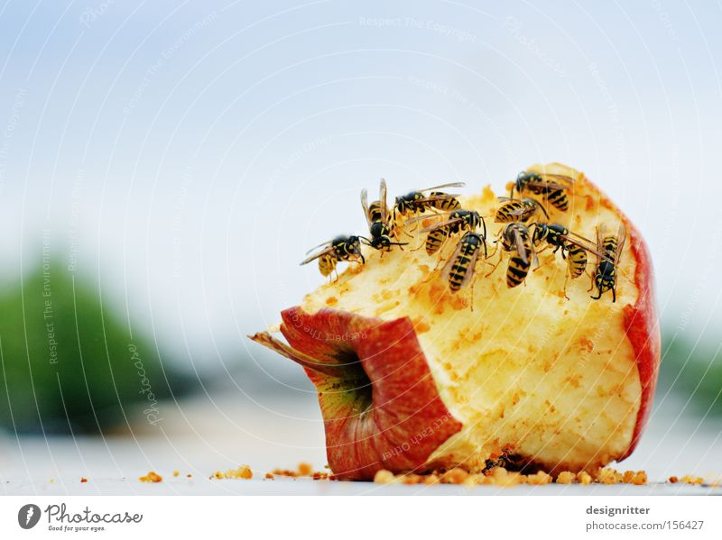 Summer Nutrition Fruit Dangerous Threat Apple Trash To feed Aggression Remainder Wasps Sting Insect Biogradable waste