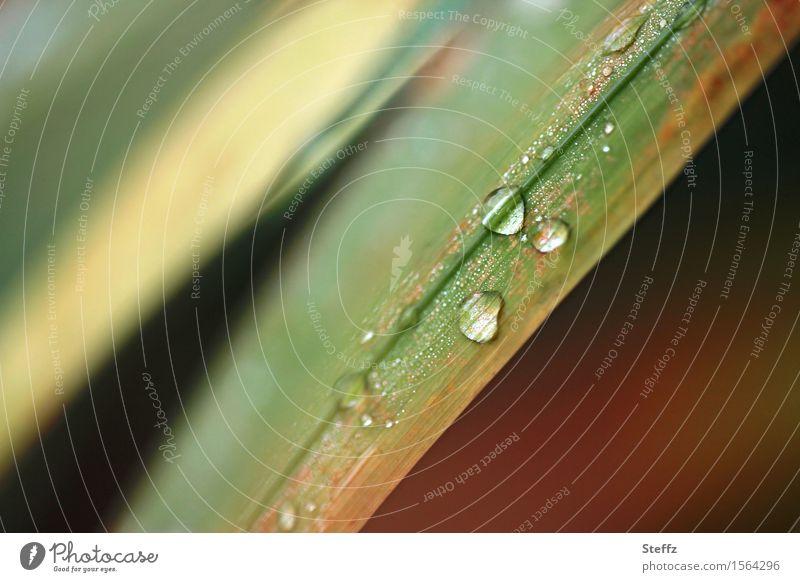 from grass and rain Autumn rain raindrops Drop autumn impression Grass blade of grass Drops of water Rain Wild plant Hydrophobic rainy autumn grasses