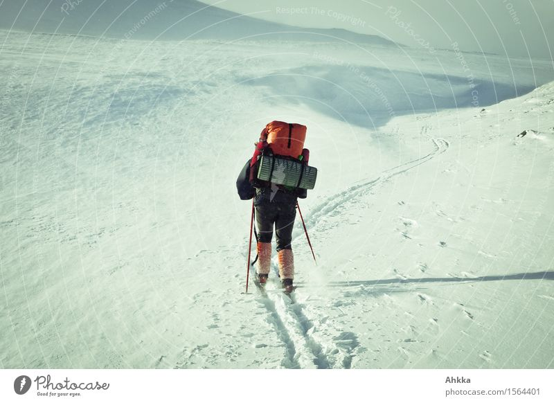 Skier in arctic snow landscape Vacation & Travel Adventure Expedition Snow Winter vacation Human being Life 1 Nature Landscape Ice Frost Movement meek Sports