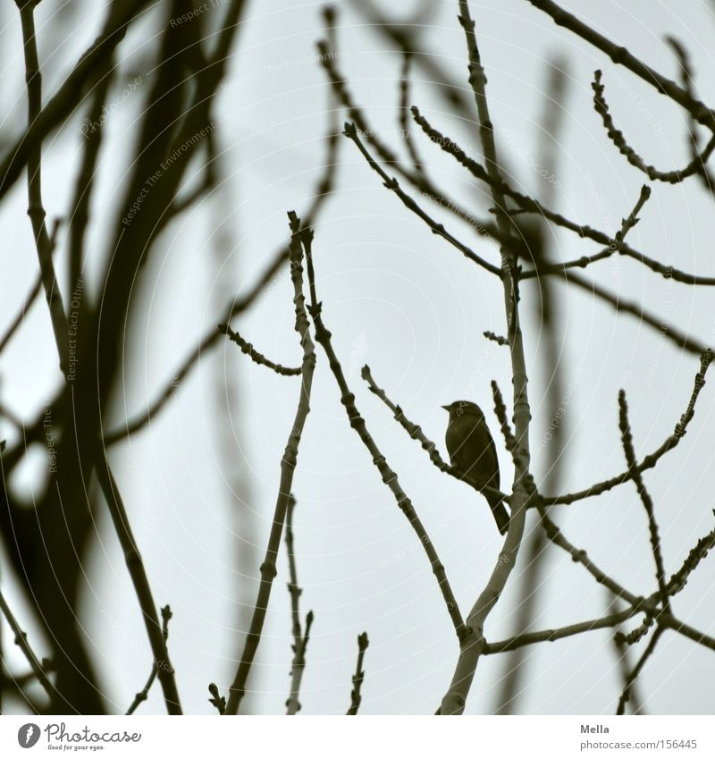 mini Tree Bushes Bird Small Gloomy Gray Diminutive Goblin Dwarf Branch Twig Branchage Dreary Colour photo Subdued colour Day Twilight