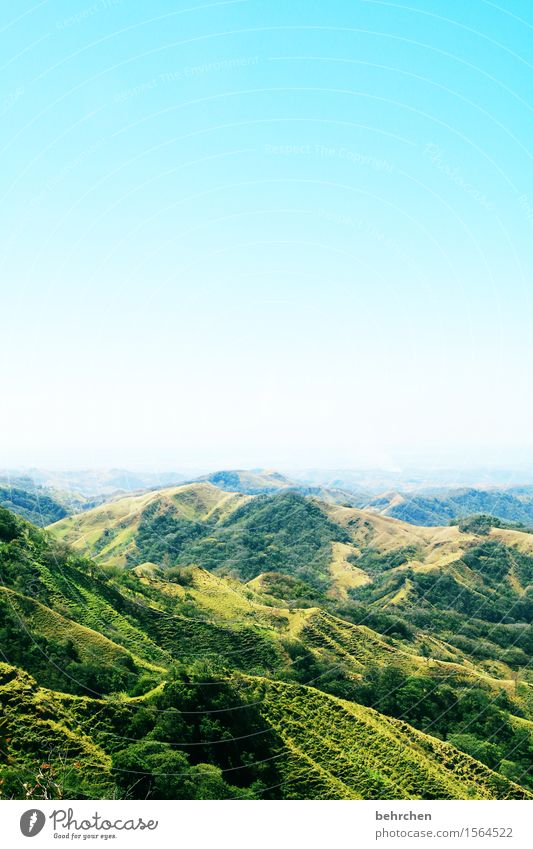 on the way Vacation & Travel Tourism Trip Adventure Far-off places Freedom Summer Nature Landscape Plant Sky Cloudless sky Beautiful weather Tree Grass Forest