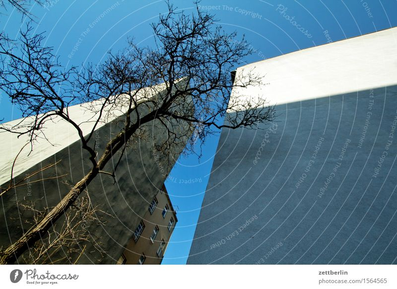 Sky City Tree House (Residential Structure) Wall (building) Berlin Wall (barrier) City life Living or residing Copy Space Branch Tree trunk Twig Apartment Building Cloudless sky Tower block