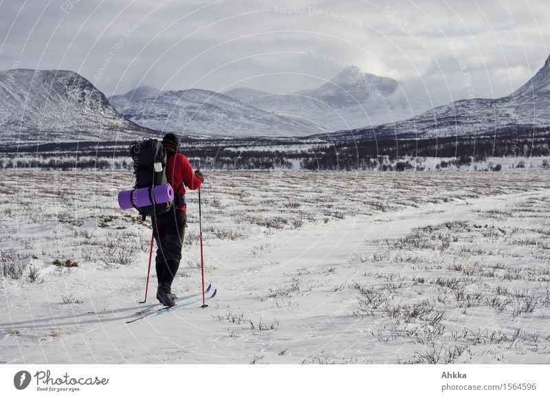 Rondane VI Snow Winter vacation Winter sports Skiing Young man Youth (Young adults) 1 Human being Landscape Mountain Snowcapped peak Lanes & trails Backpack