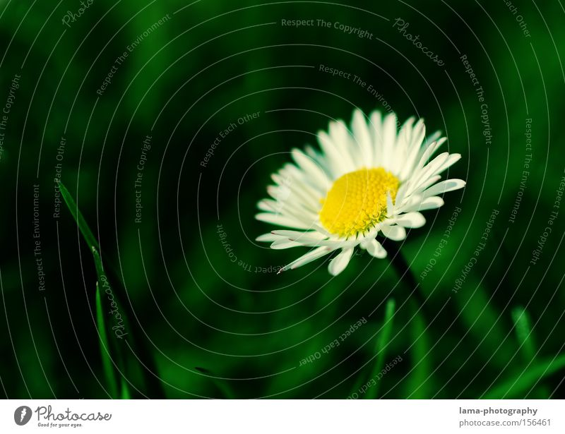 Flower Meadow Blossom Grass Spring Bouquet Blade of grass Daisy Flower meadow Marguerite Sprout