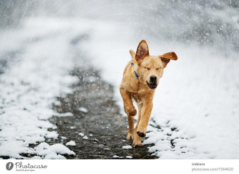 Dog Nature Animal Joy Winter Forest Baby animal Environment Movement Natural Snow Healthy Happy Snowfall Park Weather