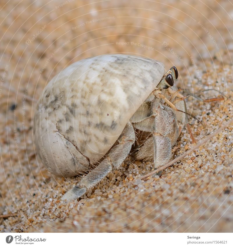 telescope eyes Animal Wild animal Snail Mussel Animal tracks Cancer Shellfish Hermit Hermit crab 1 Crawl Colour photo Multicoloured Exterior shot Close-up