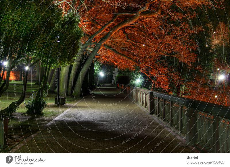 Red Trees Night Lanes & trails Heidelberg Castle Park