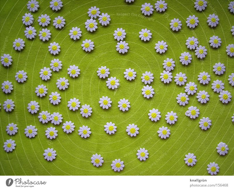 White Flower Green Blossom Spring Fresh Blossoming Daisy Flower meadow Meadow flower
