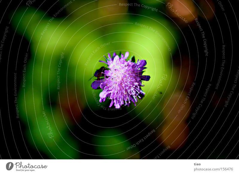 Flower Plant Blossom Spring Violet Bee Clover Wasps