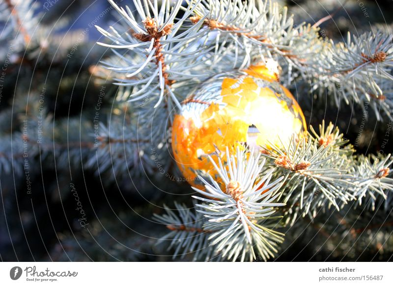 Nature Old Christmas & Advent Green Winter Yellow Decoration Beautiful weather Broken Kitsch Mirror Sphere Christmas tree Fir tree Silver Silver