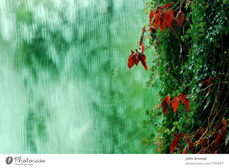 Green is the Colour Ivy Red Leaf Plant Waterfall Well Virgin forest Rain Asia Garden Park