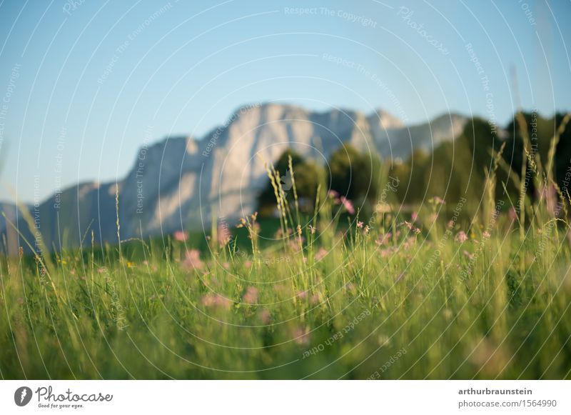 Flower meadow in front of mountain panorama Leisure and hobbies Vacation & Travel Tourism Trip Summer Summer vacation Mountain Hiking Environment Nature