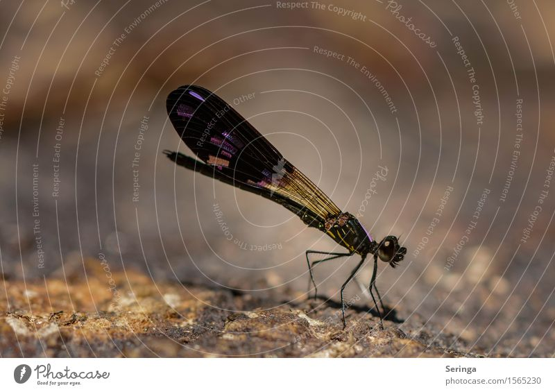 And another dragonfly. Nature Plant Animal Park Meadow Virgin forest Hill Rock Coast Lakeside River bank Beach Bay Wild animal Fly Animal face Wing Dragonfly