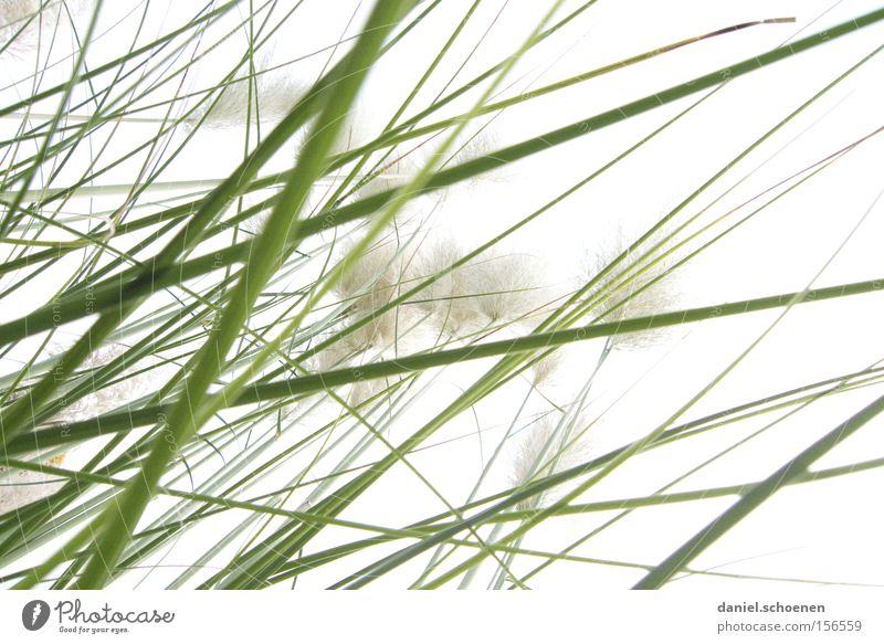 grass Grass Green Bright Light Spring Perspective White Background picture Abstract Macro (Extreme close-up) Close-up