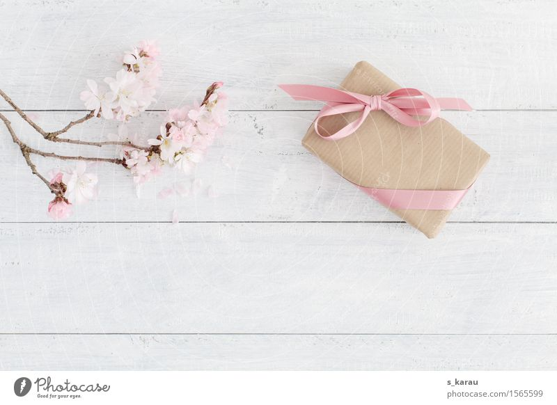 spring Valentine's Day Mother's Day Wedding Birthday Baptism Tree Bow Wood Happiness Fresh Pink White Friendship Background picture Gift Cherry blossom Spring