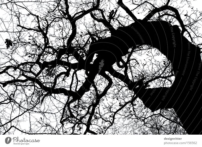 fairytale forest Tree Oak tree Old Bleak Creepy Eerie Fairy tale Witch Ghosts & Spectres  Monster Magician Jinxed Kobold elfish
