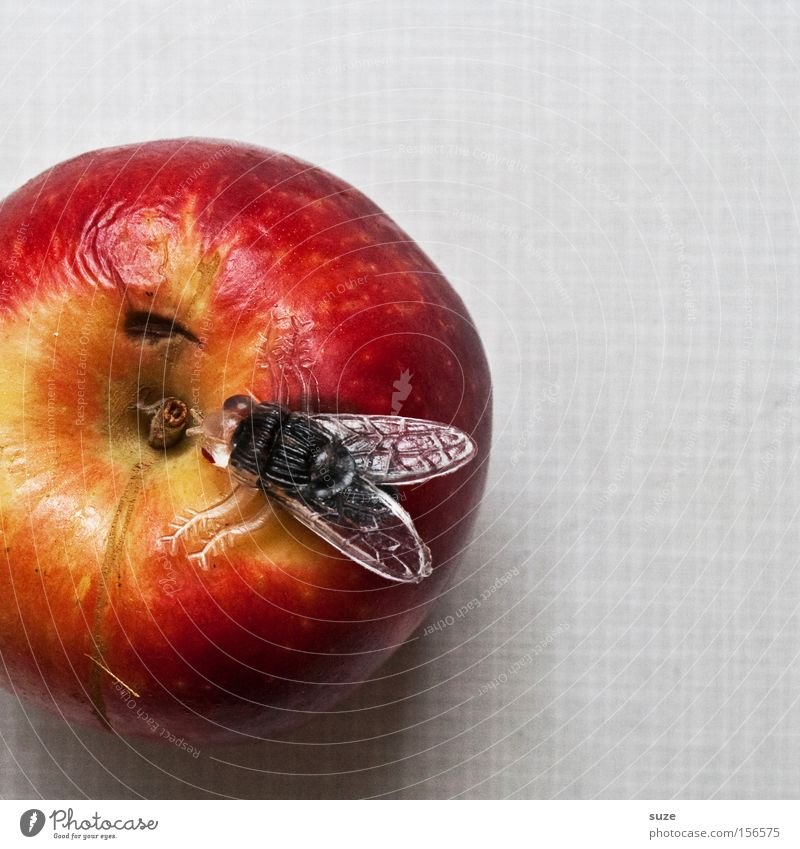 fruit fly Food Fruit Apple Nutrition Organic produce Vegetarian diet Diet Leisure and hobbies Table Fly Decoration Plastic Delicious Funny Sweet Red