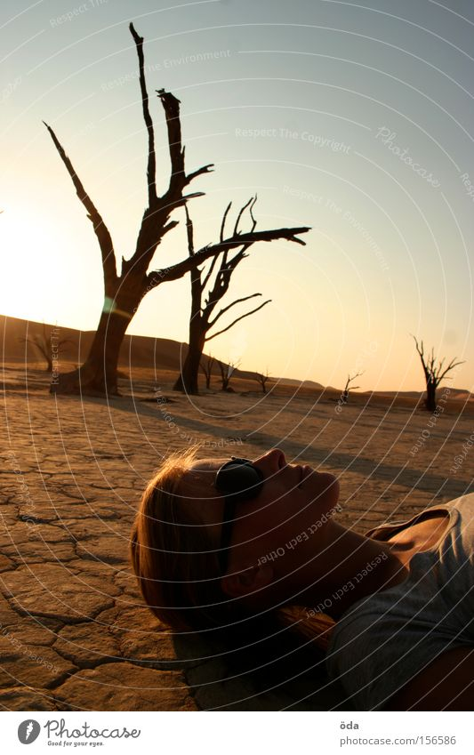 Light and shadow Desert Tree Dry Shadow Twig Branch Death Namibia Namib desert Loneliness Dead Vlei Sunset Environmental pollution Africa