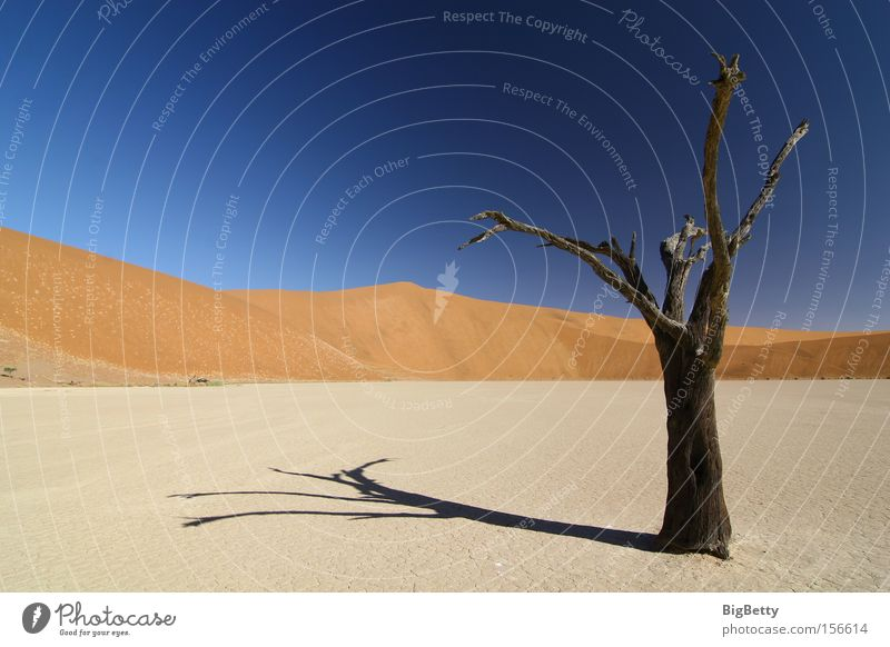 Einsamkeit Africa Desert Namibia Wüste Düne Baum Sossous Vlei Dead Vlei Trockenheit Sesriem Weite Dürre Sand Tod Stille Kameldorn