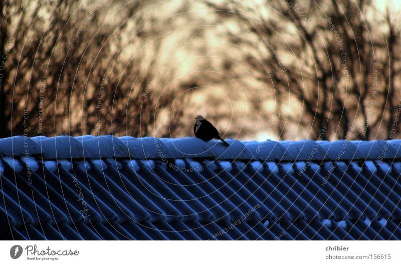 Winter Snow Ice Bird Sit Frost Roof Freeze Blackbird
