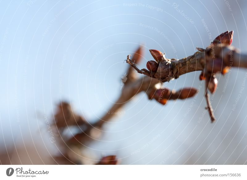 Beautiful Sky Plant Winter Leaf Blossom Spring Bushes Macro (Extreme close-up) Bud Leaf bud Delivery person