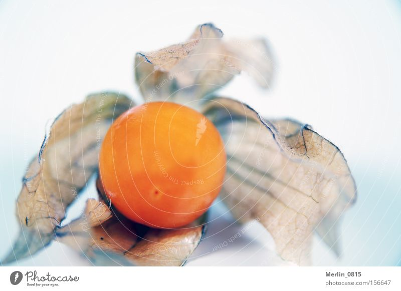 Nutrition Small Healthy Orange Fruit Decoration Virgin forest Cocktail Vitamin Caribbean Sea Tropical Physalis