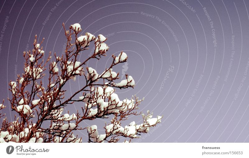 Nature Beautiful Tree Blue Winter Colour Snow Bushes Violet Branch Smooth Twig Filter Reduced