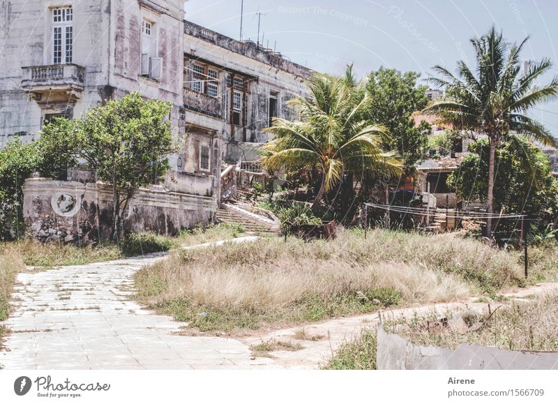 dreamed Palm tree Havana Cuba Town Deserted House (Residential Structure) Dream house Ruin Park Building Villa Farmhouse Facade Garden Old Large Hot Bright