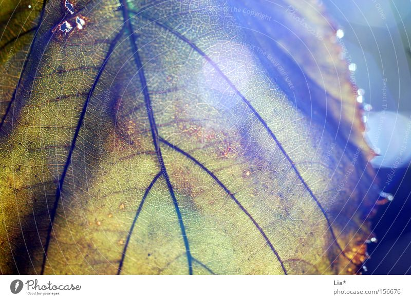 Old Tree Leaf Autumn Life Sadness Lighting Time Beginning Hope Transience Goodbye Shriveled Backwards Concealed Rachis