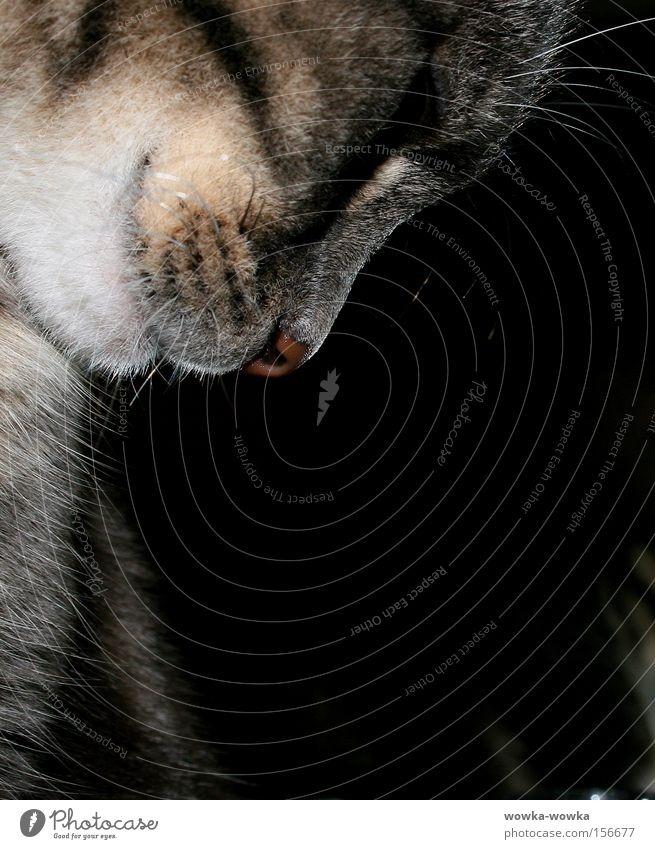 Thoughtful Cat Gray Red Mouth Animal alisa whiskers Eyes Nose