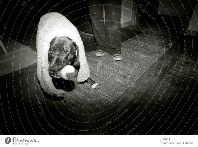 White Joy Black Playing Movement Dog Legs Power Film Toys Pelt To hold on Hide Chucks Sheep Paw