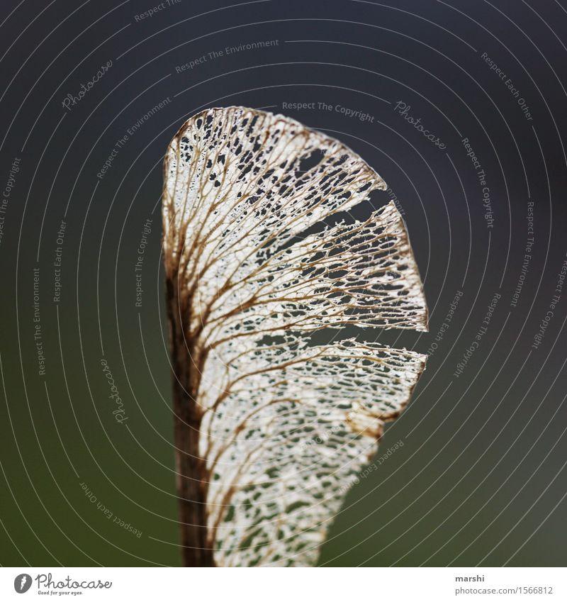 Plant Leaf Garden Moody Wing Delicate Shriveled Maple tree Rachis Fragile