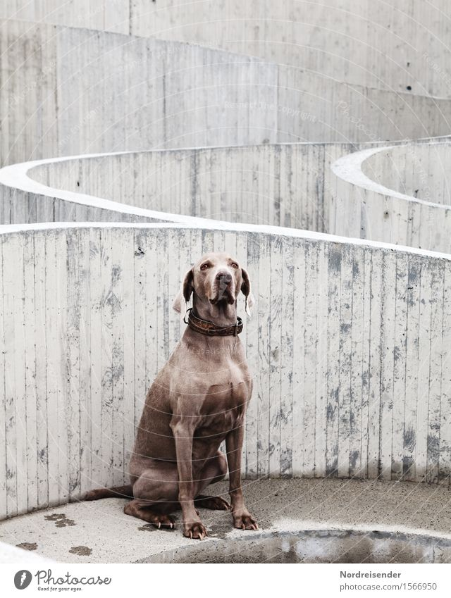 Dog Animal Architecture Line Friendship Leisure and hobbies Sit Wait Observe Concrete Construction site Friendliness Curiosity Protection Manmade structures