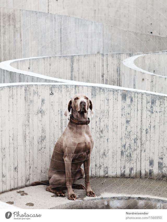 Revitalized concrete Construction site Village Manmade structures Architecture Tourist Attraction Animal Pet Dog Concrete Line Observe Looking Sit Wait