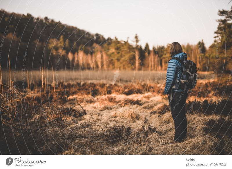 Nature Plant Tree Sun Landscape Loneliness Far-off places Grass Horizon Free Hiking Idyll Stand Bushes Observe Beautiful weather